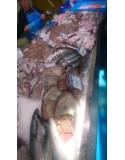 Kita žuvis
