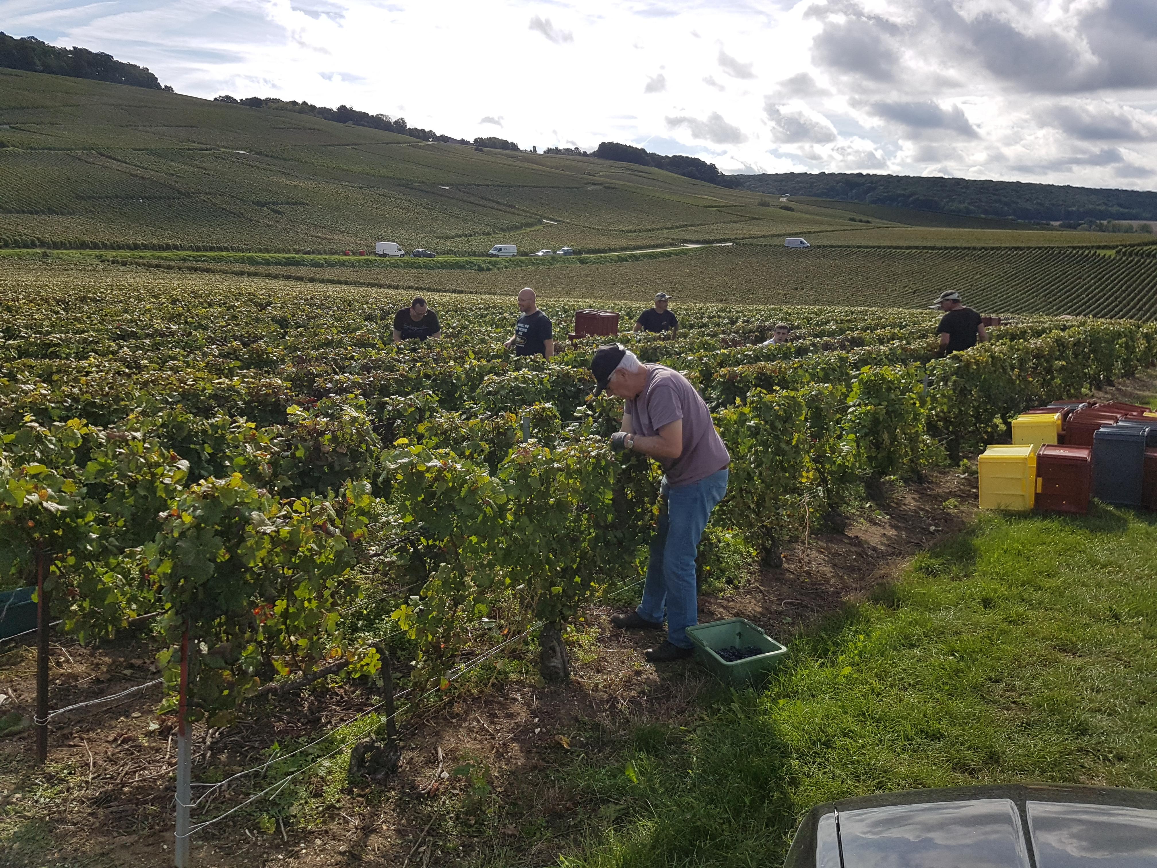 Francis Orban champagne šampanas tikras putojantis rankomis skinti žmonėstradicija prancūzija